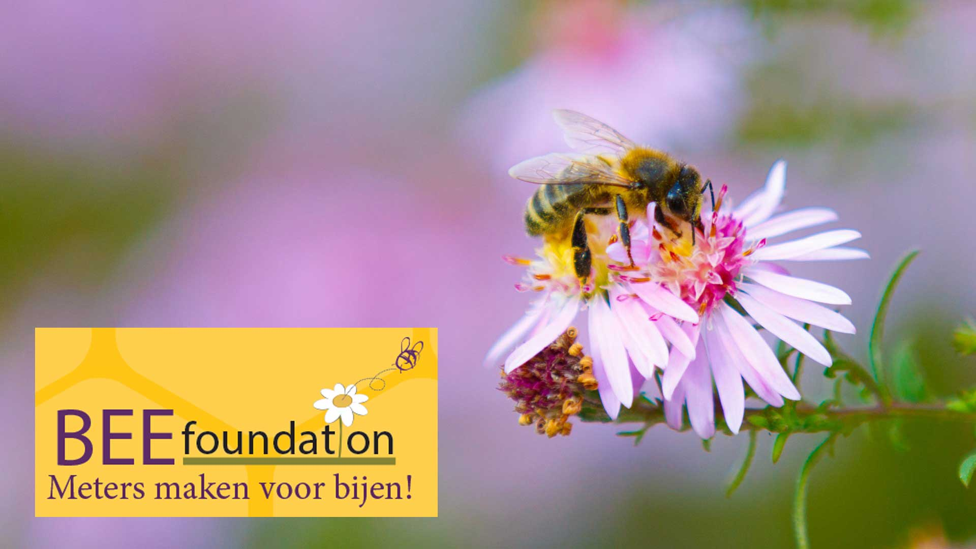 Bee Foundation